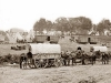 pulling-horses-wagons2.jpg