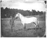 cw-horse.jpg
