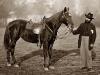 doctor-horse.jpg