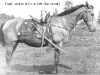 frank-cw-horse-photo-1885.jpg