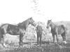 gen-dan-butterfields-horses.jpg